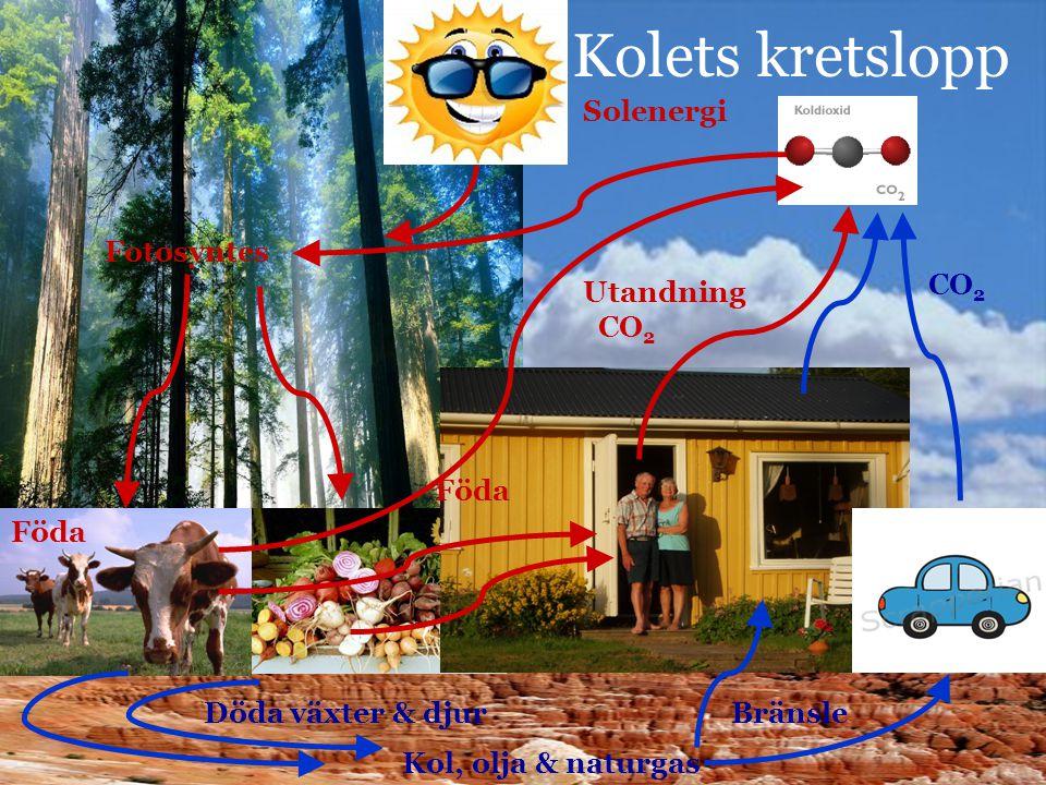 Kolets kretslopp Solenergi Fotosyntes Föda Utandning CO 2 Döda växter & djur Kol, olja & naturgas Bränsle CO 2