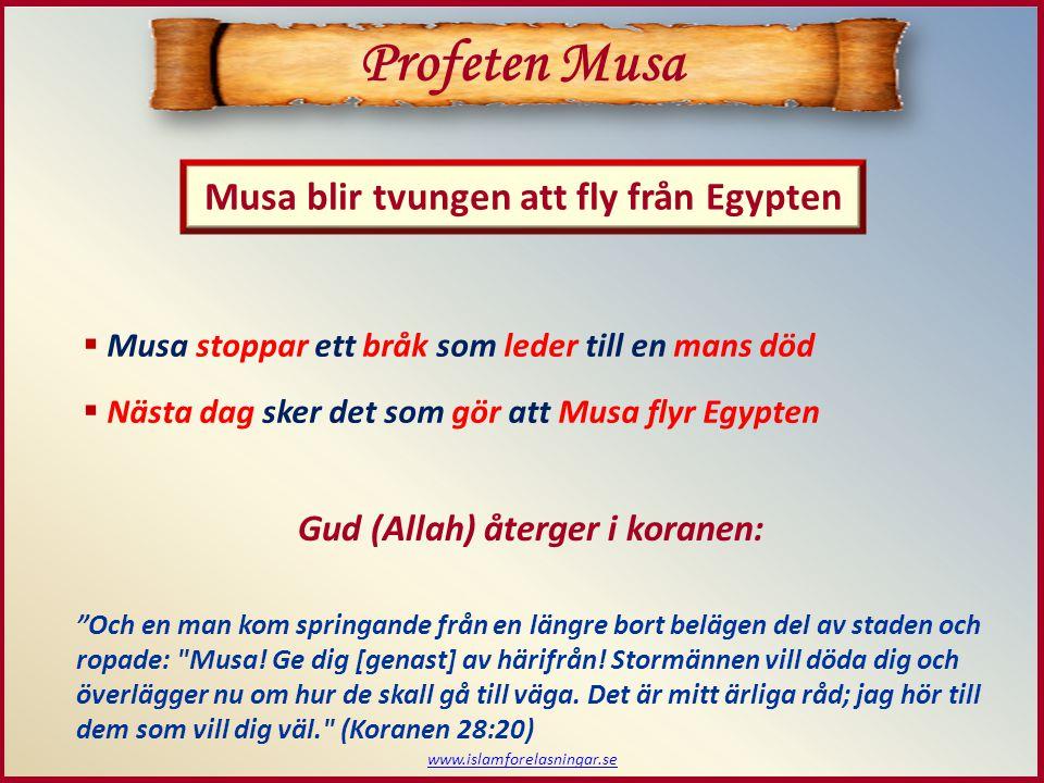 www.islamforelasningar.se Musa blir tvungen att fly från Egypten Profeten Musa  Musa stoppar ett bråk som leder till en mans död  Nästa dag sker det som gör att Musa flyr Egypten Och en man kom springande från en längre bort belägen del av staden och ropade: Musa.