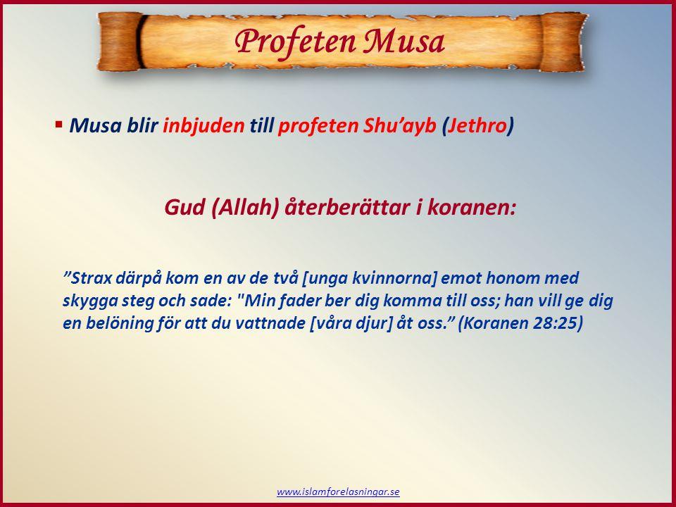  Musa blir inbjuden till profeten Shu'ayb (Jethro) Gud (Allah) återberättar i koranen: Strax därpå kom en av de två [unga kvinnorna] emot honom med skygga steg och sade: Min fader ber dig komma till oss; han vill ge dig en belöning för att du vattnade [våra djur] åt oss. (Koranen 28:25) www.islamforelasningar.se Profeten Musa