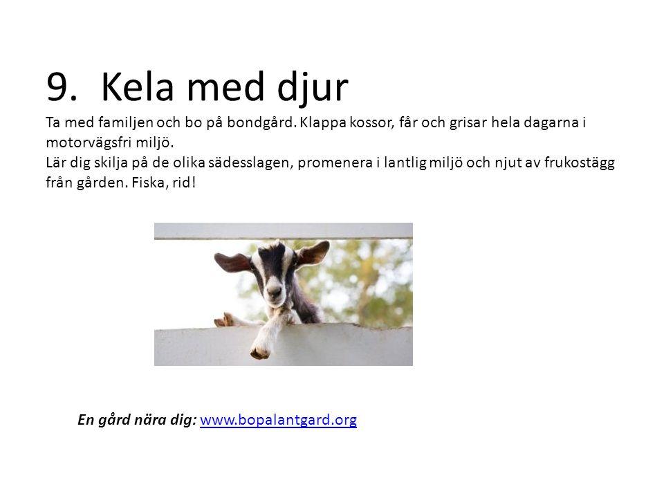9. Kela med djur Ta med familjen och bo på bondgård.