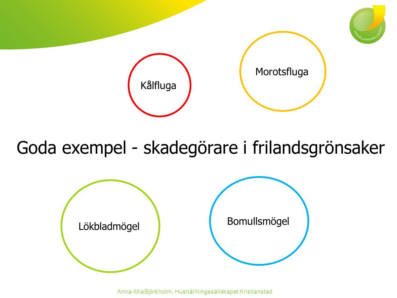 Goda exempel - skadegörare i frilandsgrönsaker Anna-Mia Björkholm, Hushållningssällskapet Kristianstad Morotsfluga Lökbladmögel Bomullsmögel Kålfluga