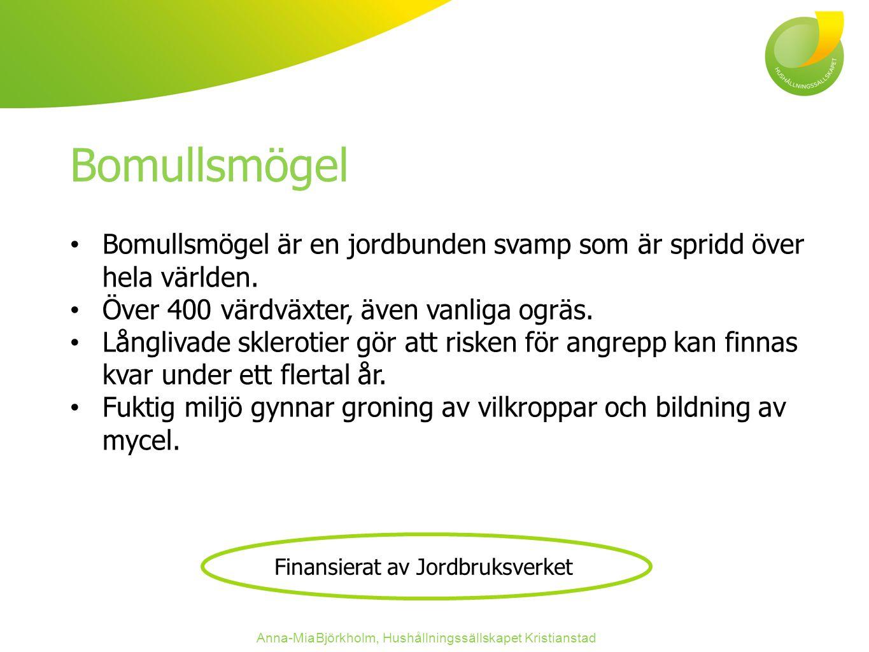 Bomullsmögel Bomullsmögel är en jordbunden svamp som är spridd över hela världen.