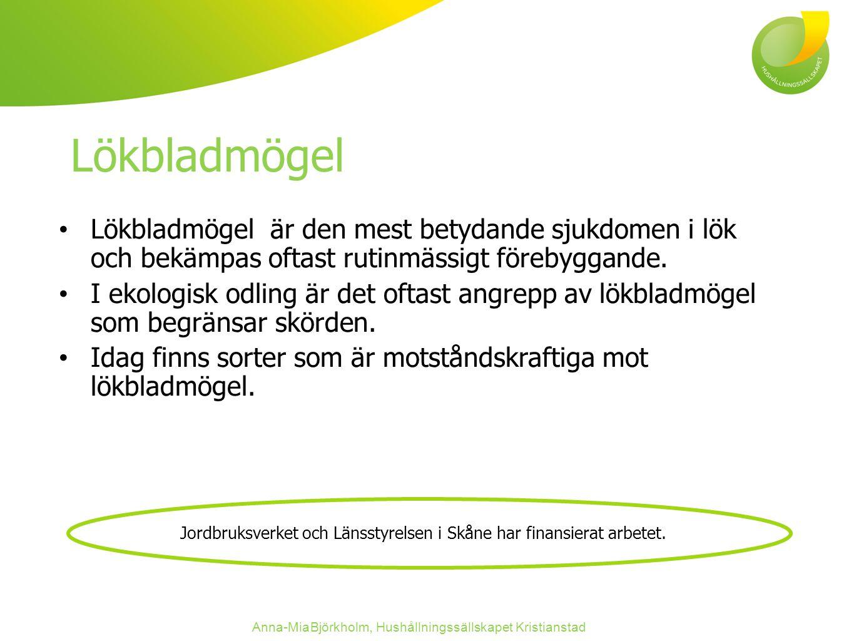 Lökbladmögel Lökbladmögel är den mest betydande sjukdomen i lök och bekämpas oftast rutinmässigt förebyggande.