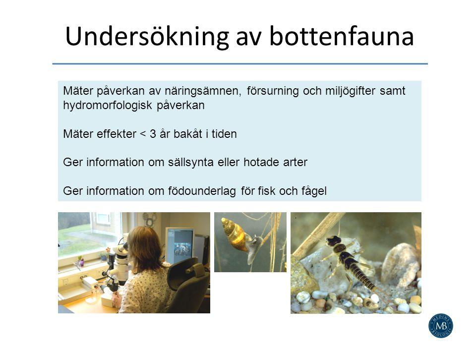 Undersökning av bottenfauna Mäter påverkan av näringsämnen, försurning och miljögifter samt hydromorfologisk påverkan Mäter effekter < 3 år bakåt i tiden Ger information om sällsynta eller hotade arter Ger information om födounderlag för fisk och fågel