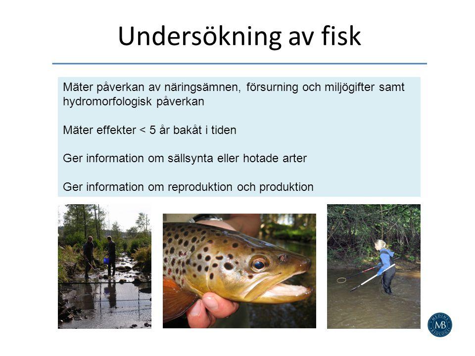 Undersökning av fisk Mäter påverkan av näringsämnen, försurning och miljögifter samt hydromorfologisk påverkan Mäter effekter < 5 år bakåt i tiden Ger information om sällsynta eller hotade arter Ger information om reproduktion och produktion