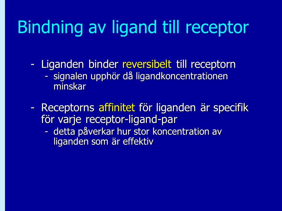 Bindning av ligand till receptor -Liganden binder reversibelt till receptorn -signalen upphör då ligandkoncentrationen minskar -Receptorns affinitet f