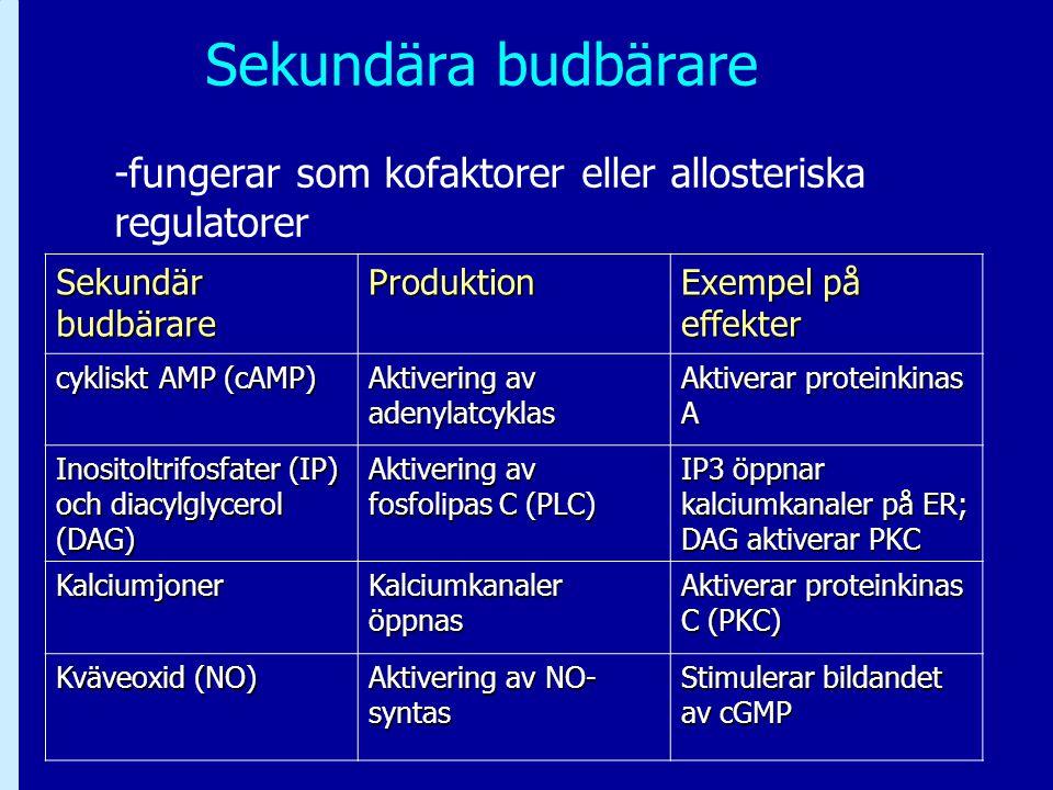 Sekundära budbärare -fungerar som kofaktorer eller allosteriska regulatorer Sekundär budbärare Produktion Exempel på effekter cykliskt AMP (cAMP) Akti