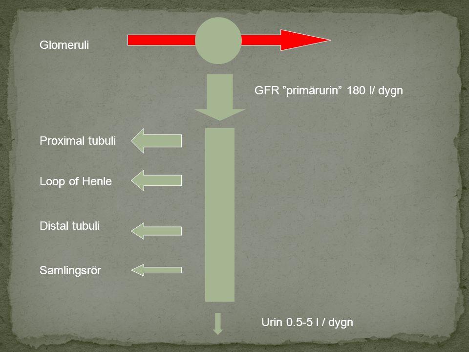 Glomeruli Proximal tubuli Loop of Henle Distal tubuli Samlingsrör GFR primärurin 180 l/ dygn Urin 0.5-5 l / dygn