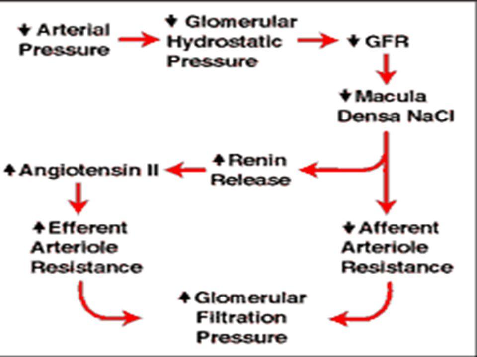 Angiotensinogen Angiotensin I Angiotensin II AT(II)1- receptor (AT(II)2-receptor) Renin ACE Salt-och-vatten- retention Aldosteron Vasokonstriktion