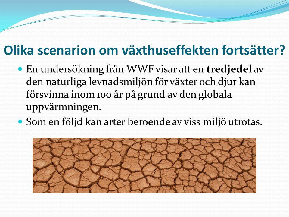 Olika scenarion om växthuseffekten fortsätter? En undersökning från WWF visar att en tredjedel av den naturliga levnadsmiljön för växter och djur kan