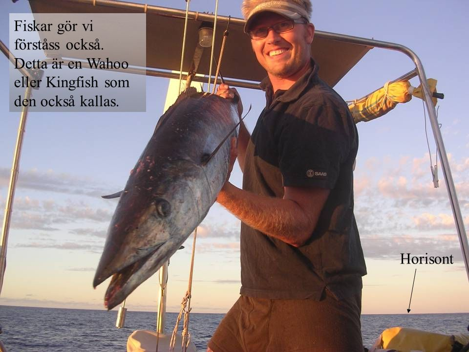Horisont Fiskar gör vi förståss också. Detta är en Wahoo eller Kingfish som den också kallas.