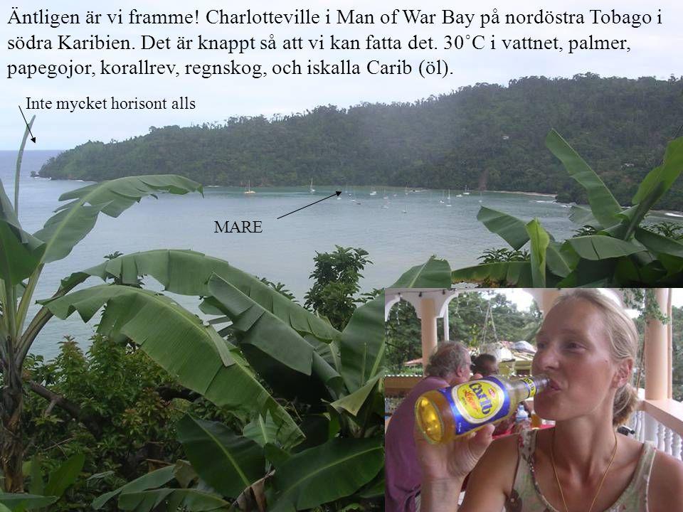 Äntligen är vi framme! Charlotteville i Man of War Bay på nordöstra Tobago i södra Karibien. Det är knappt så att vi kan fatta det. 30˚C i vattnet, pa