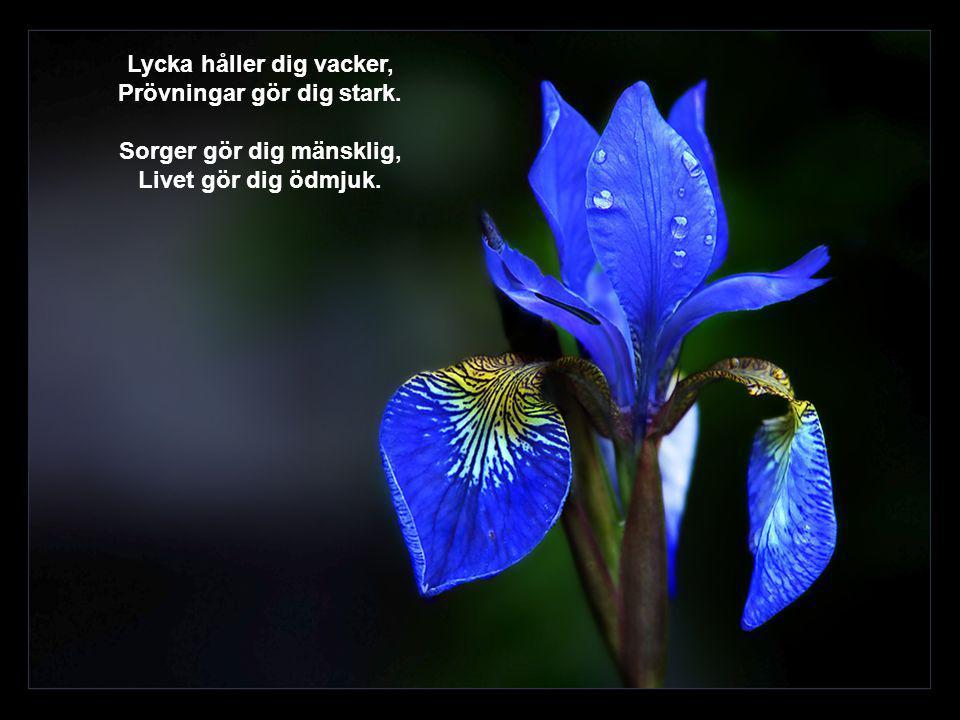 Jag vill hellre ha en blomma eller ett vänligt ord från en vän, medan jag lever – än en massa när jag är borta..