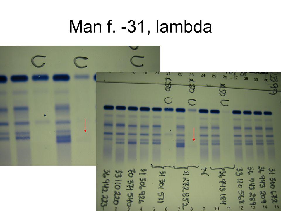 Man f. -31, lambda