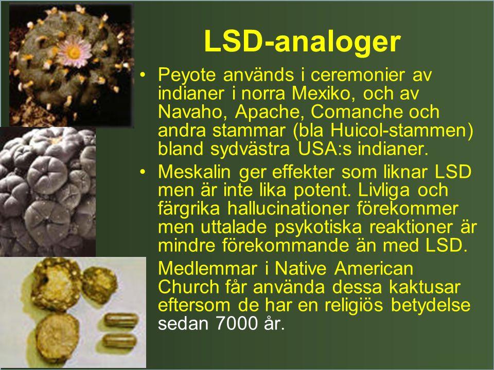 LSD-analoger Peyote används i ceremonier av indianer i norra Mexiko, och av Navaho, Apache, Comanche och andra stammar (bla Huicol-stammen) bland sydvästra USA:s indianer.