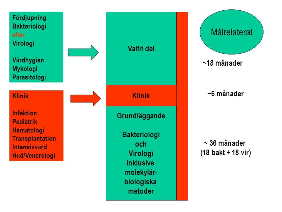 Grundläggande Bakteriologi och Virologi inklusive molekylär- biologiska metoder ~ 36 månader (18 bakt + 18 vir) Klinik ~6 månader Valfri del ~18 månader Målrelaterat Klinik Infektion Pediatrik Hematologi Transplantation Intensivvård Hud/Venerologi Fördjupning Bakteriologi eller Virologi Vårdhygien Mykologi Parasitologi