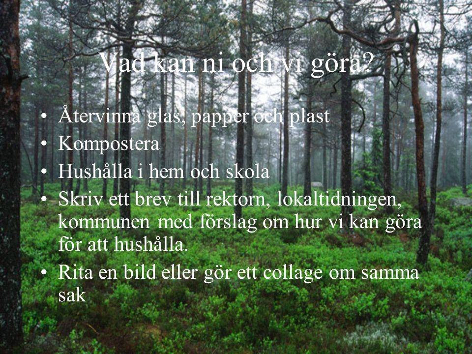 Natur forts. Skog, liksom andra växter inom vår natur producerar syre. För vår överlevnad är det viktigt att syret produceras.
