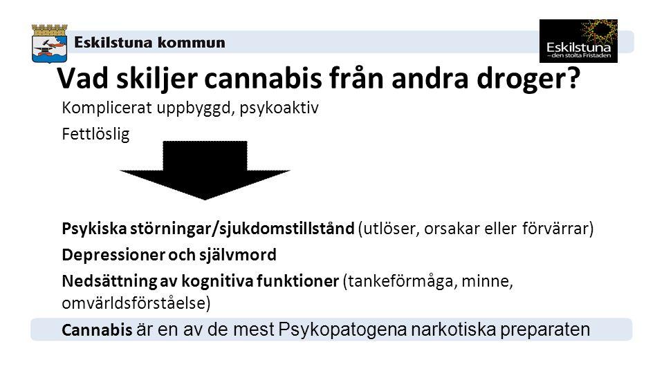 Vad skiljer cannabis från andra droger.