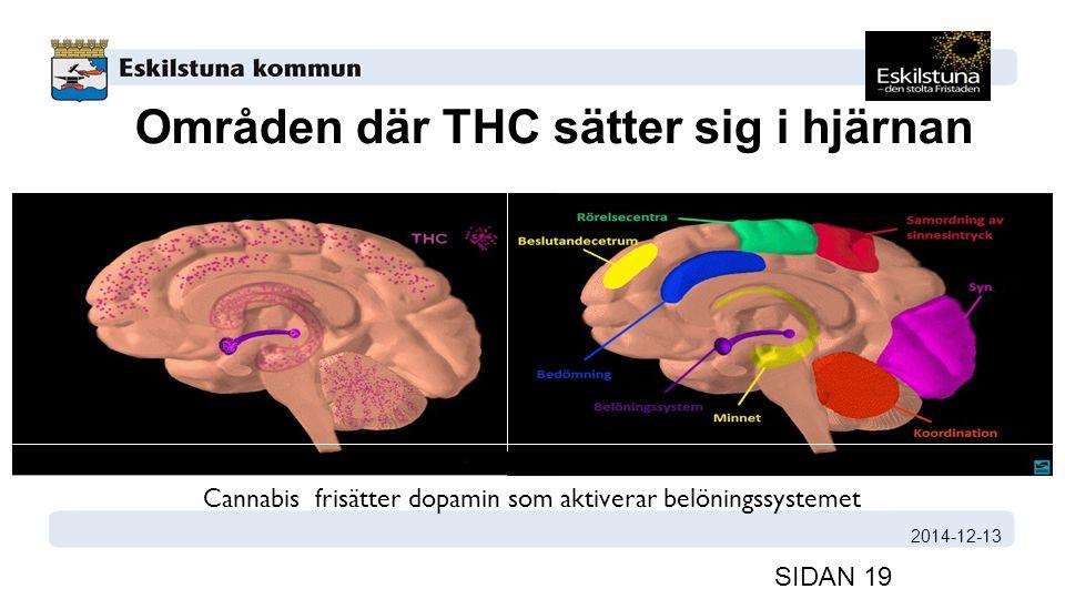 Områden där THC sätter sig i hjärnan 2014-12-13 SIDAN 19 Cannabis frisätter dopamin som aktiverar belöningssystemet