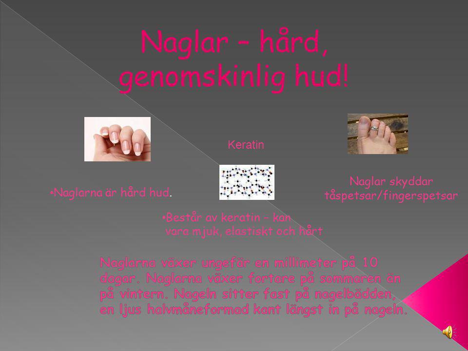 Naglar – hård, genomskinlig hud.Naglarna är hård hud.