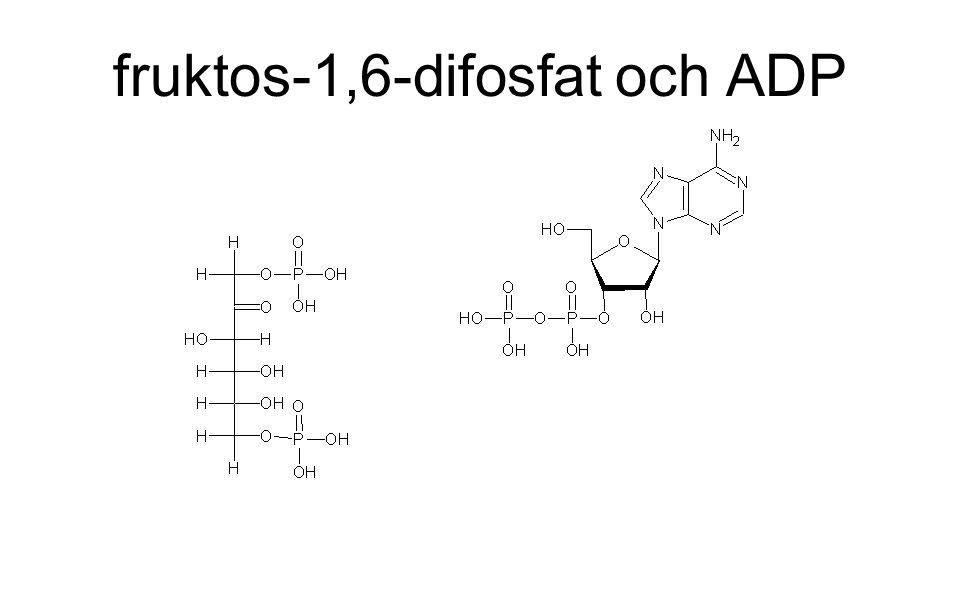 fruktos-1,6-difosfat och ADP