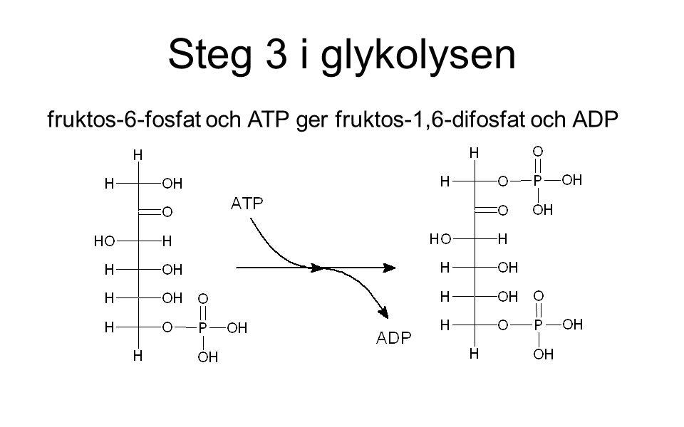 Steg 3 i glykolysen fruktos-6-fosfat och ATP ger fruktos-1,6-difosfat och ADP