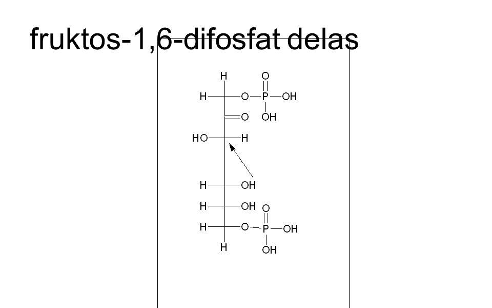 fruktos-1,6-difosfat delas