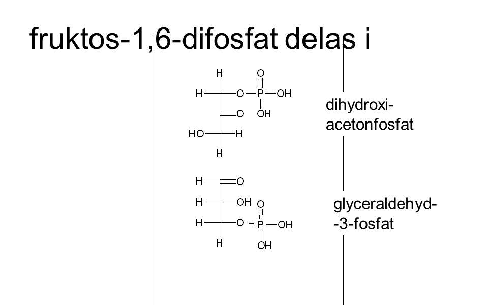 fruktos-1,6-difosfat delas i dihydroxi- acetonfosfat glyceraldehyd- -3-fosfat