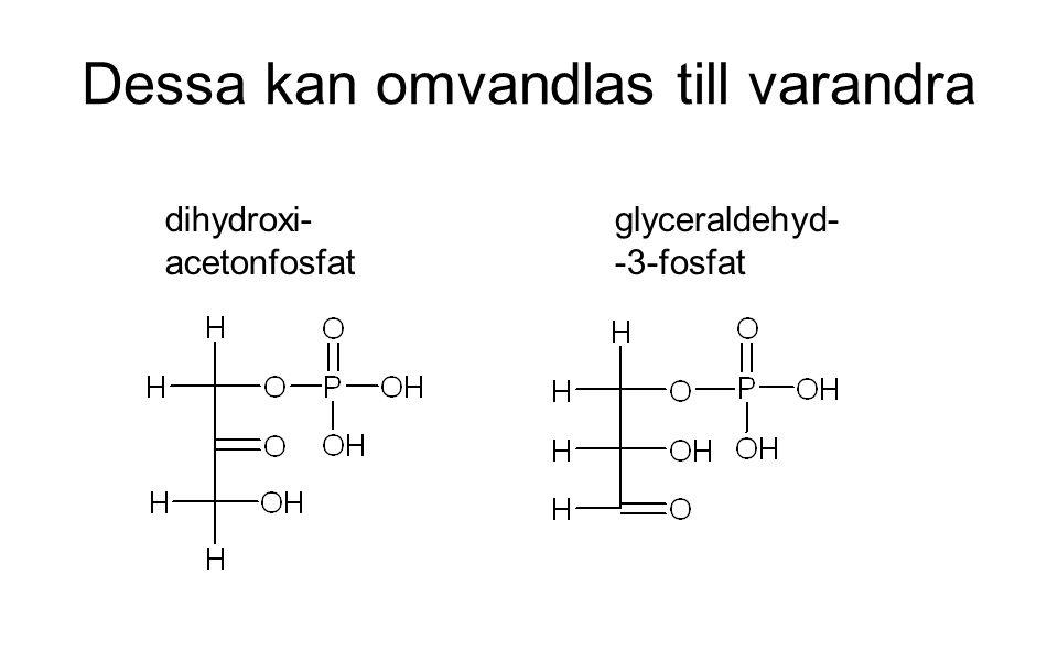 Dessa kan omvandlas till varandra dihydroxi- acetonfosfat glyceraldehyd- -3-fosfat