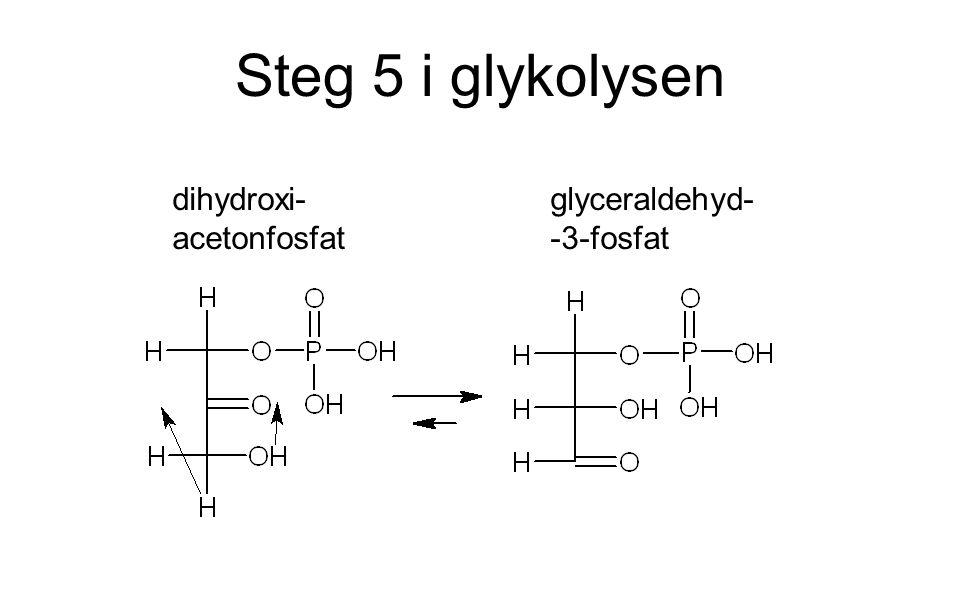 Steg 5 i glykolysen dihydroxi- acetonfosfat glyceraldehyd- -3-fosfat