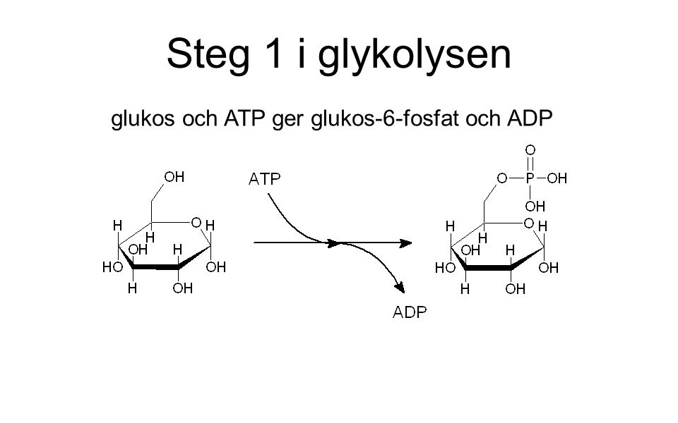 Steg 1 i glykolysen glukos och ATP ger glukos-6-fosfat och ADP