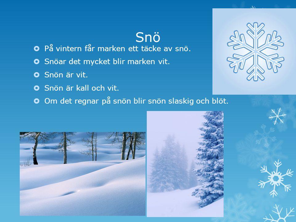 Snö  På vintern får marken ett täcke av snö. Snöar det mycket blir marken vit.