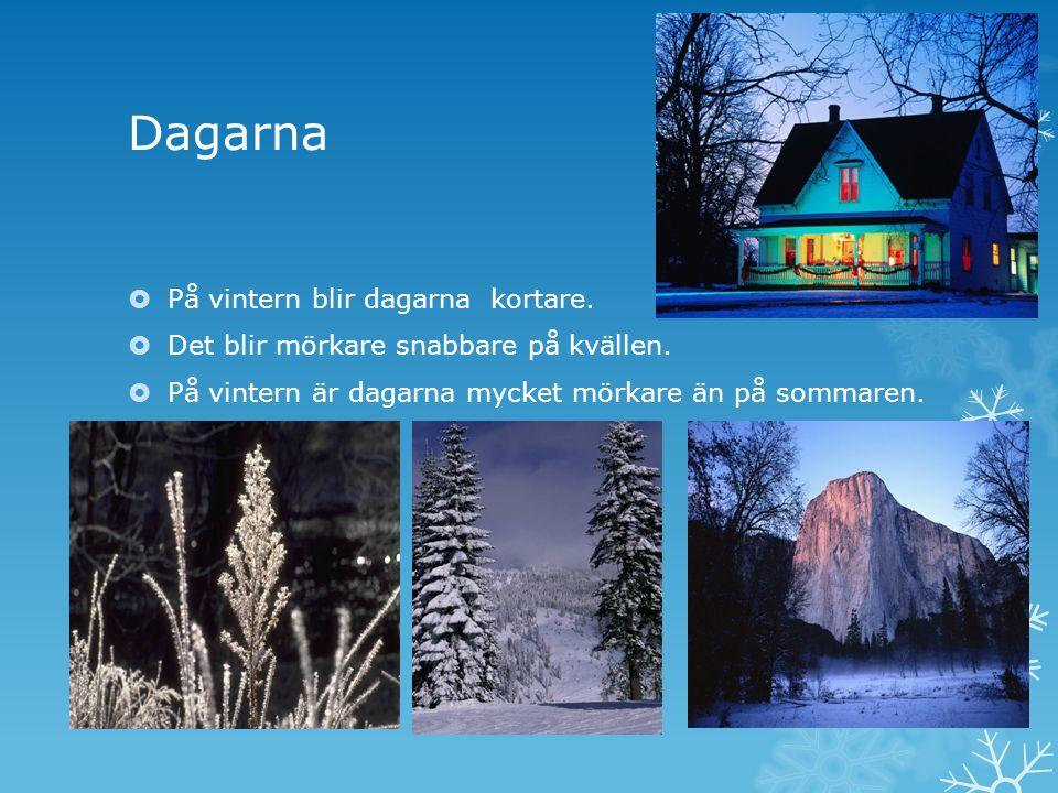 Dagarna  På vintern blir dagarna kortare. Det blir mörkare snabbare på kvällen.