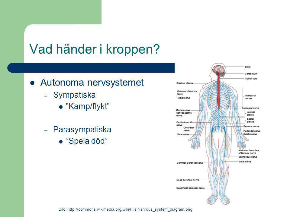 """Vad händer i kroppen? Autonoma nervsystemet – Sympatiska """"Kamp/flykt"""" – Parasympatiska """"Spela död"""" Bild: http://commons.wikimedia.org/wiki/File:Nervou"""