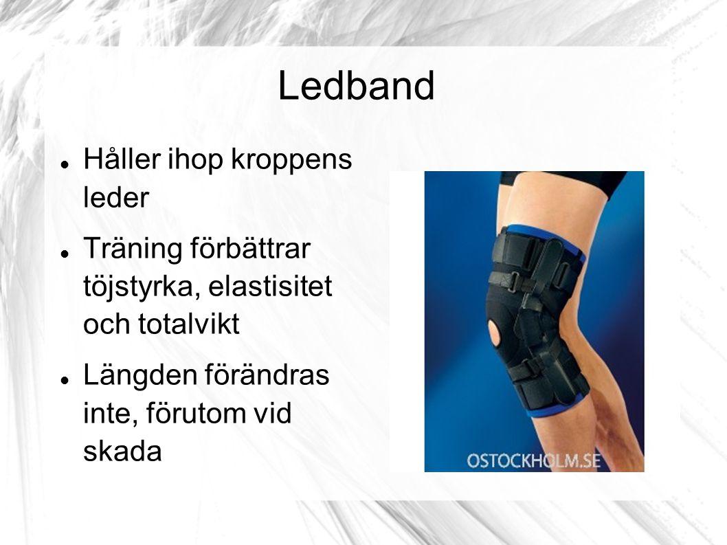 Ledband Håller ihop kroppens leder Träning förbättrar töjstyrka, elastisitet och totalvikt Längden förändras inte, förutom vid skada