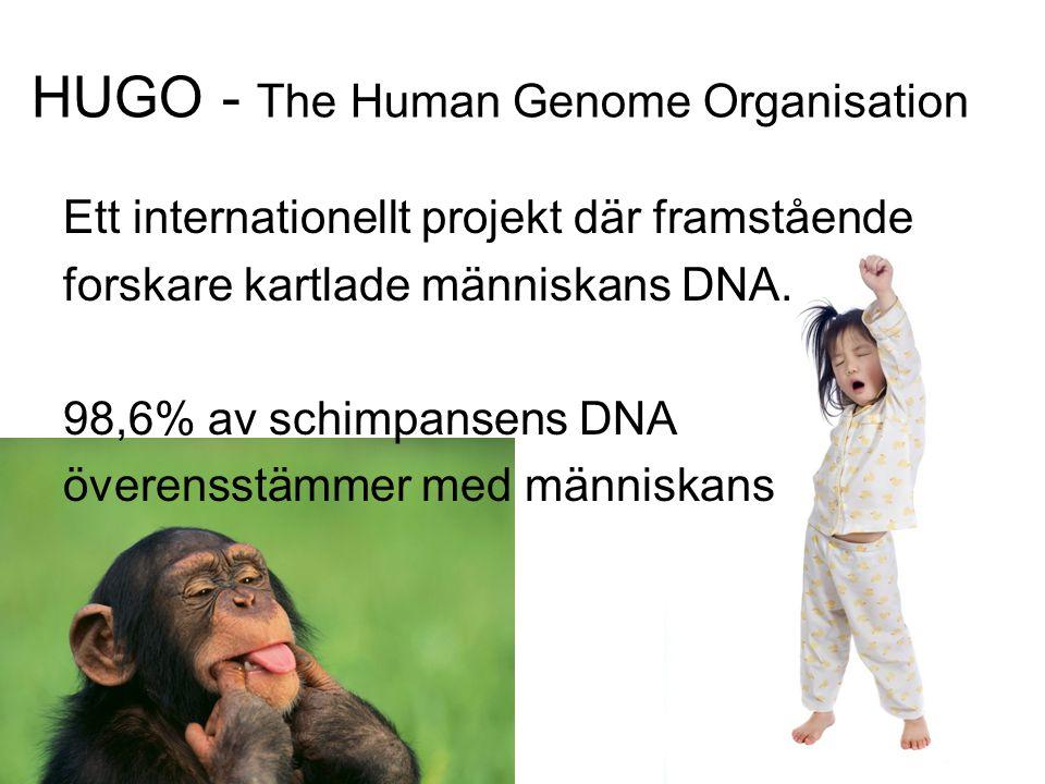 HUGO - The Human Genome Organisation Ett internationellt projekt där framstående forskare kartlade människans DNA. 98,6% av schimpansens DNA överensst