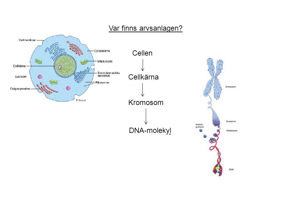 Var finns arvsanlagen? Cellen Cellkärna Kromosom DNA-molekyl