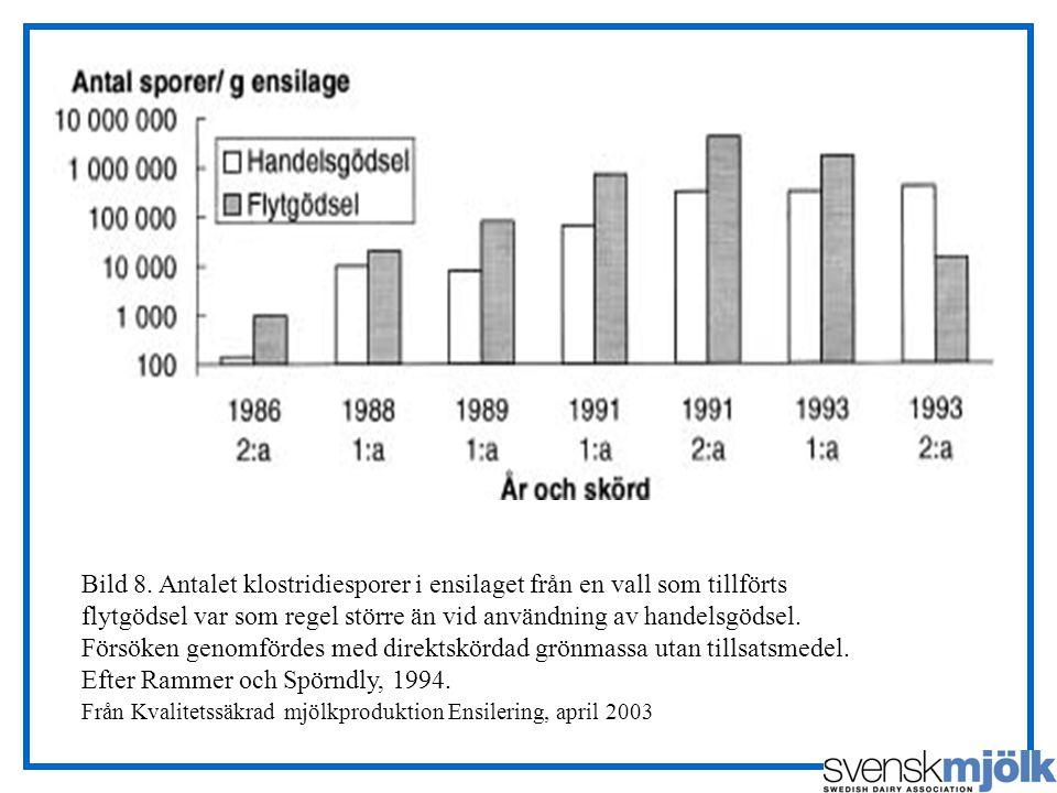 Bild 8. Antalet klostridiesporer i ensilaget från en vall som tillförts flytgödsel var som regel större än vid användning av handelsgödsel. Försöken g