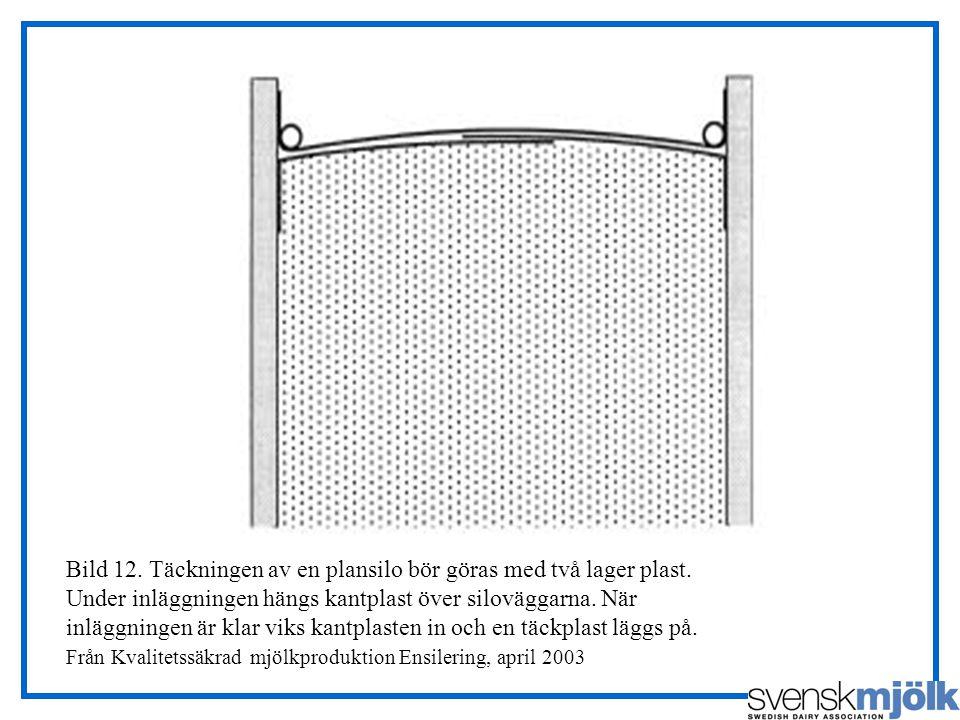 Bild 12. Täckningen av en plansilo bör göras med två lager plast. Under inläggningen hängs kantplast över siloväggarna. När inläggningen är klar viks