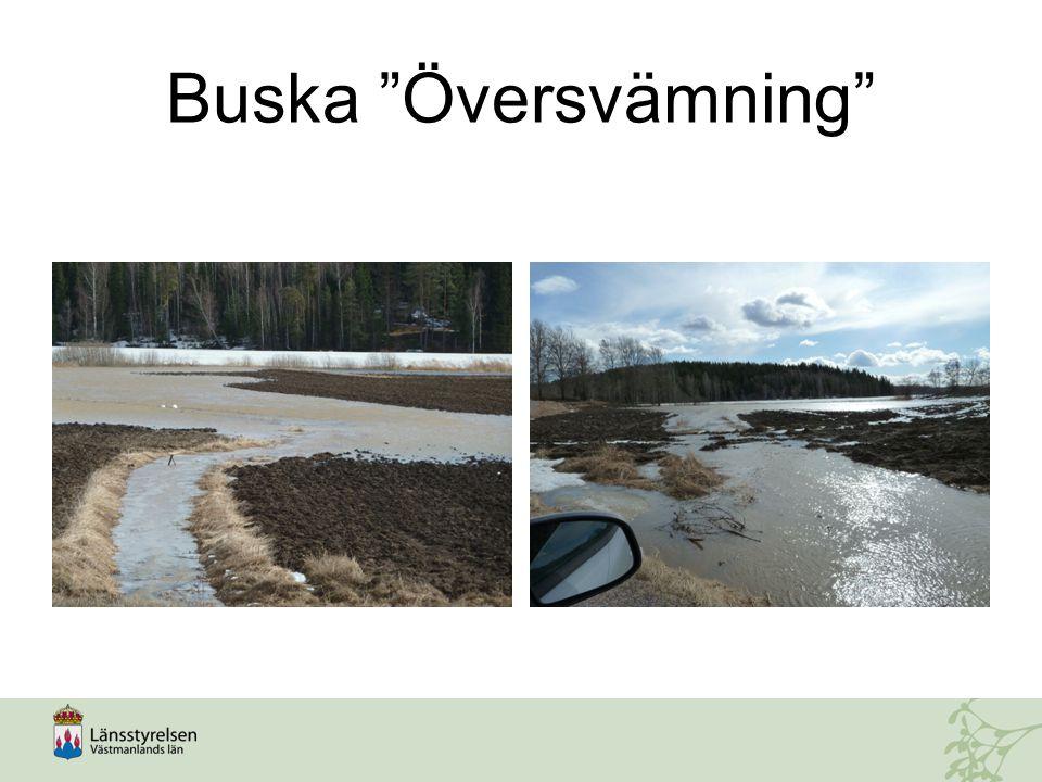 """Buska """"Översvämning"""""""