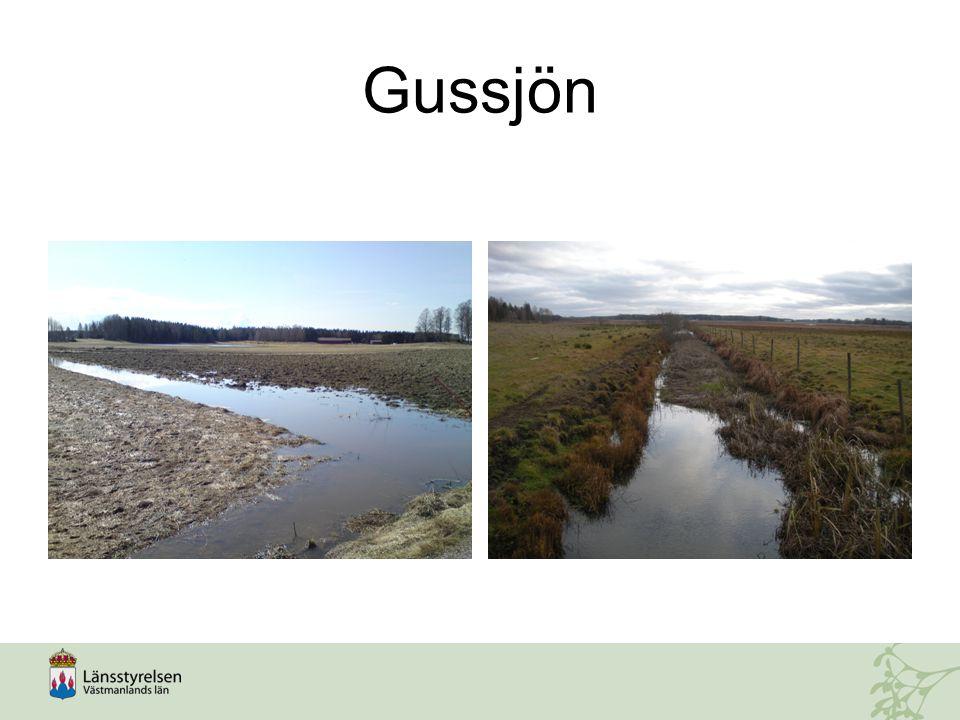 Gussjön