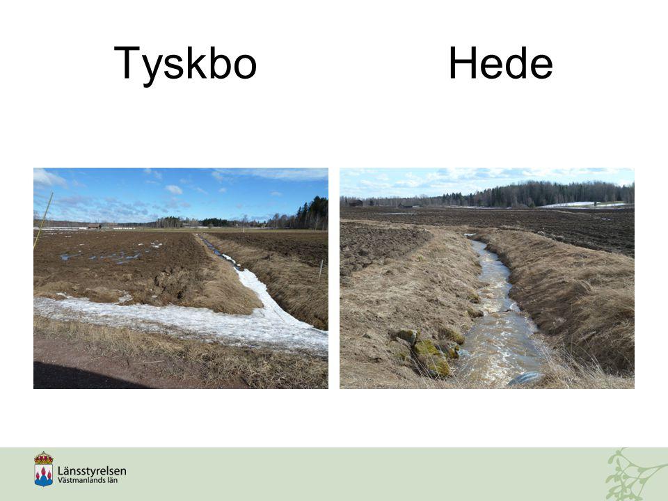 Tyskbo Hede