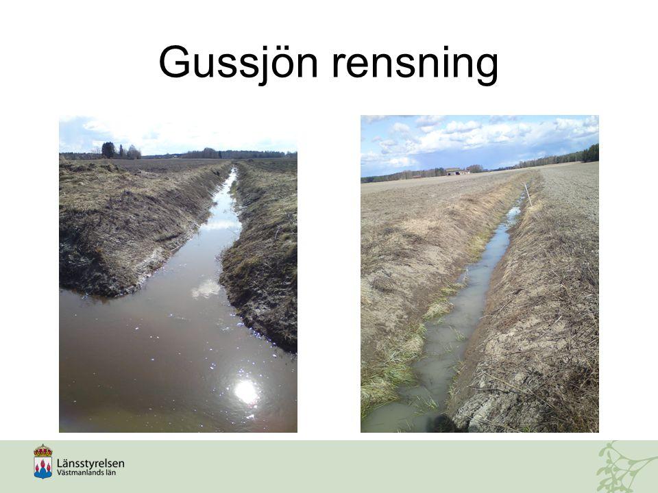 Gussjön rensning