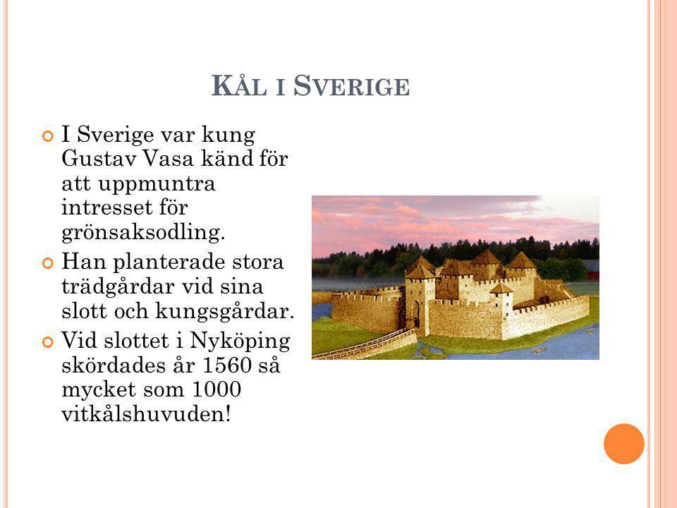 K ÅL I S VERIGE I Sverige var kung Gustav Vasa känd för att uppmuntra intresset för grönsaksodling.