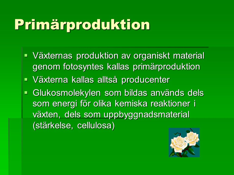 Primärproduktion  Växternas produktion av organiskt material genom fotosyntes kallas primärproduktion  Växterna kallas alltså producenter  Glukosmo