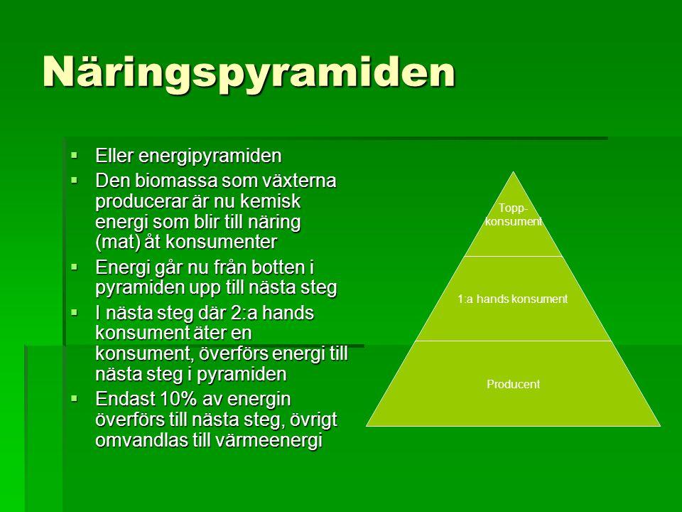 Näringspyramiden  Eller energipyramiden  Den biomassa som växterna producerar är nu kemisk energi som blir till näring (mat) åt konsumenter  Energi