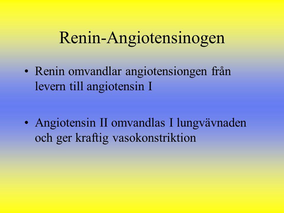 Renin-Angiotensinogen Renin omvandlar angiotensiongen från levern till angiotensin I Angiotensin II omvandlas I lungvävnaden och ger kraftig vasokonst