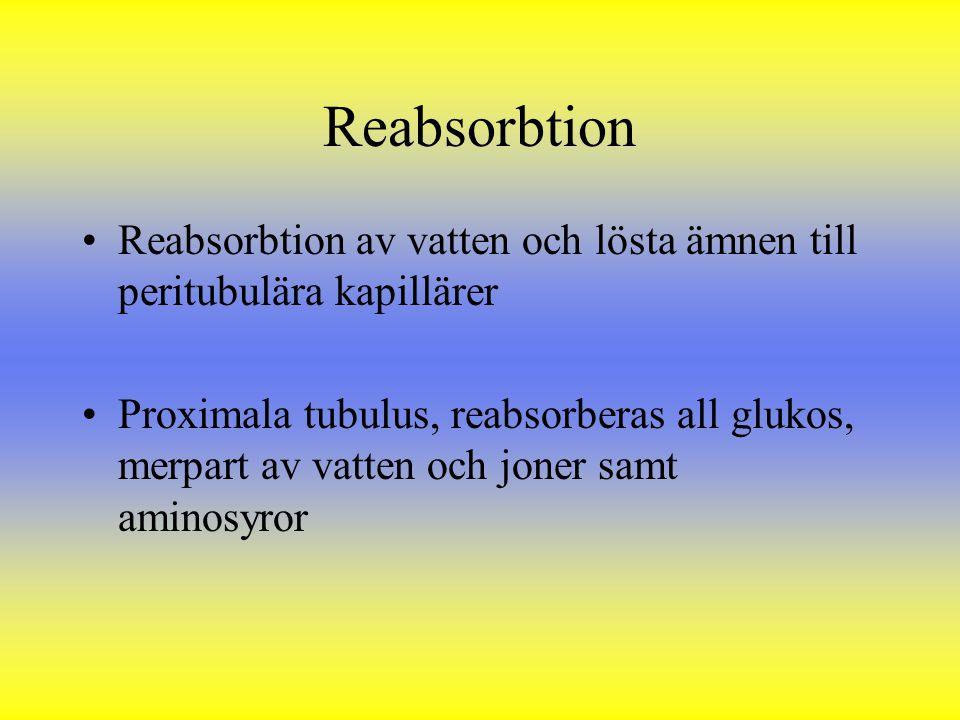 Reabsorbtion Reabsorbtion av vatten och lösta ämnen till peritubulära kapillärer Proximala tubulus, reabsorberas all glukos, merpart av vatten och jon