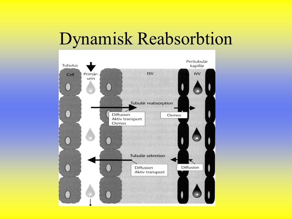 Dynamisk Reabsorbtion