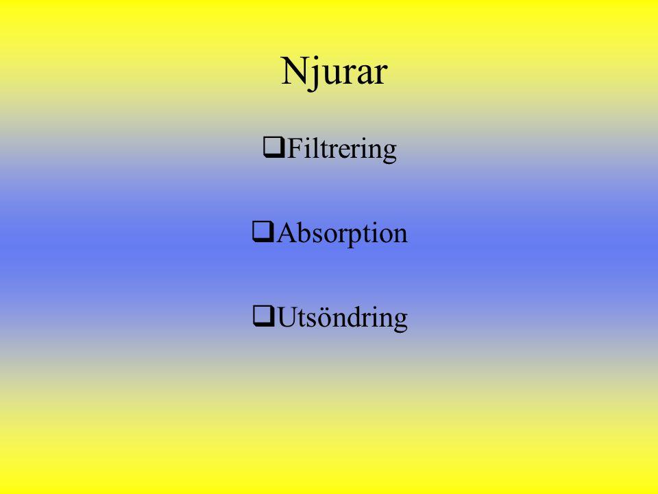 Njurar  Filtrering  Absorption  Utsöndring